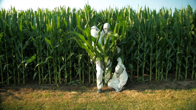 A particularly transparent scene, where Seifert dresses his kids in bio-hazard suits and runs through corn for no reason.
